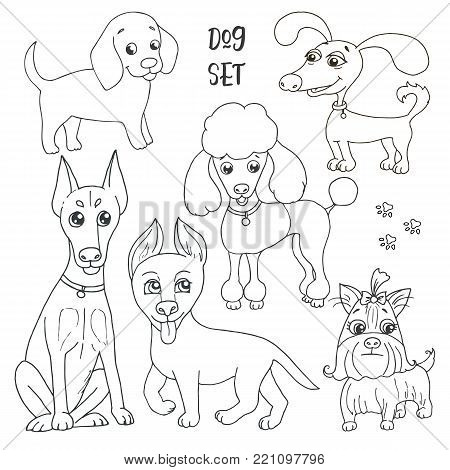 Cute set of six funny purebred dogs - poodle, doberman, german shepherd, yorkshire terrier and beagle on a white background. Vector illustration in cartoon style