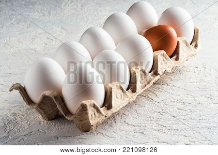 Pack egg white and one beige brown Concept harmful unnatural different other racism nationalism war opposition resistance