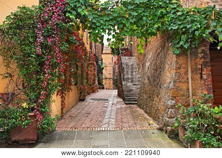 Pienza, Siena, Tuscany, Italy: picturesque ancient alley framed by creeper leaves in the old town