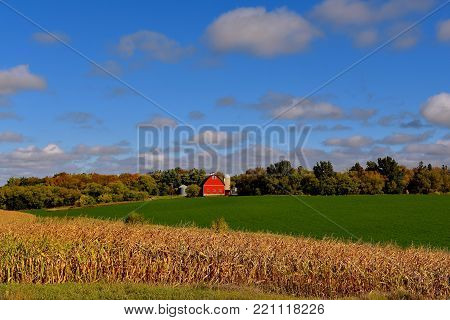 A bright red barn appears across a ripe field of corn and crop of alfalfa as the leaves are displaying autumn colors.