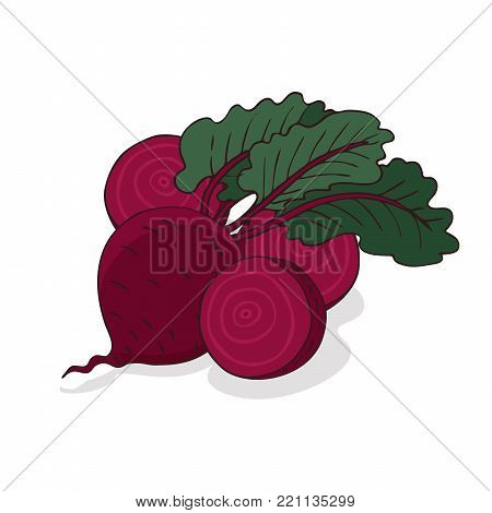 Isolate ripe beet root vegetable on white background. Close up clipart with shadow in flat realistic cartoon style. Hand drawn icon