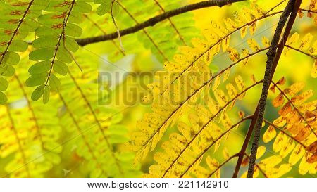 Autum leaves yellow nature  beautiful colorful background