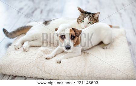 Dog and cat at home. Pets frinship
