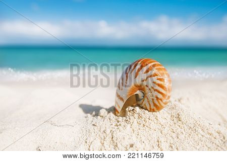 nice and shine sea shell on  beach with perfect seascape in the sun, shallow dof