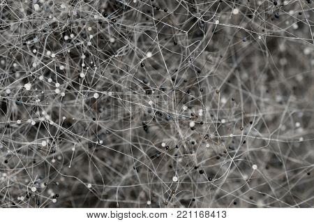 Close up, macro photography of mold. Beautyful abstract background .