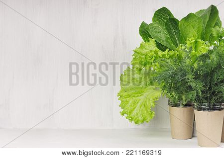 Different greens plant for salad in pots on white wooden background, copy space. Modern kitchen interior.