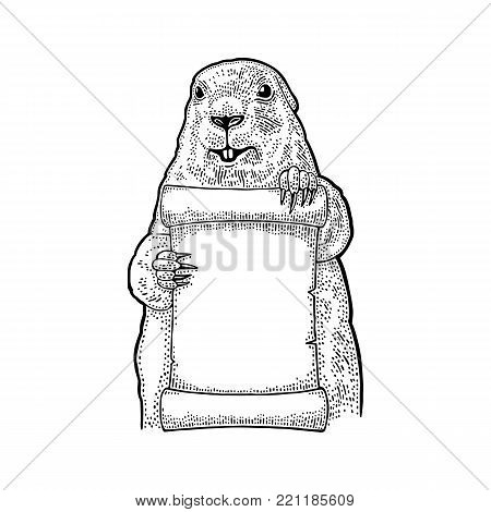Marmot holding poster. Engraving vintage vector black illustration. Isolated on white background. Hand drawn design element for greeting card Happy Groundhog Day