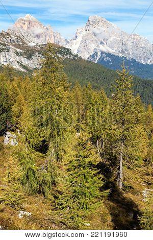 Larch wood and Le Tofane Gruppe, Dolomiti, Italy