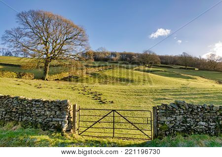 A gate in a dry stone wall enclosing a field with a lone tree