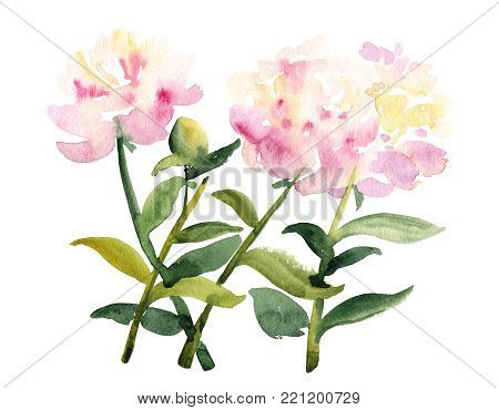 Hand painted sketch, bunch of three pink peony flowers with stem and leaves, watercolor illustration isolated on white background. Watercolor sketch of pink peony flowers on white background