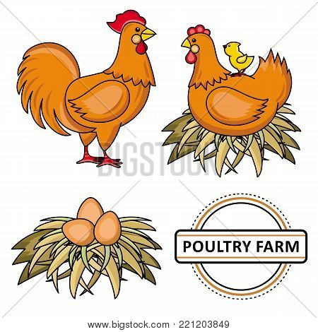 Vector flat chicken set. Brown rooster, cock, hen chicken, eggs in hay nest, yellow small chick sitting at chicken, poultry farm logo. Isolated illustration, white background. Organic food design