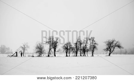 Tress and snow. Winter landscape. Black and white.