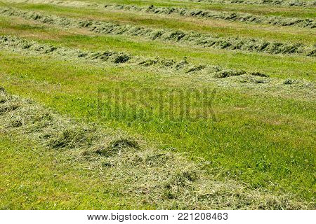 Mowed Mountain Meadow