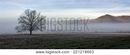 Foggy cades cove morning in great smoky mountains national park in winter