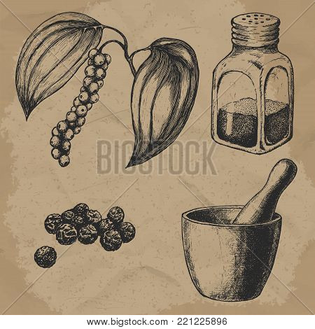 Black pepper, plant and seeds. Hand mortar with a pestle. Glass pepper. Vintage hand-drawn vector set for design. EPS10