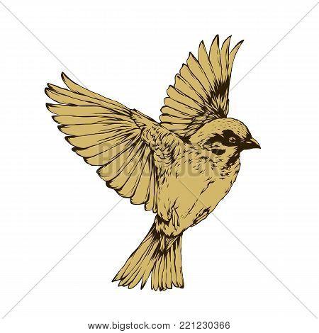 Bird:  Hand drawn bird. Sketch of sparrow and order bird. Vector illustration of sparrow and order bird. Bird vintage