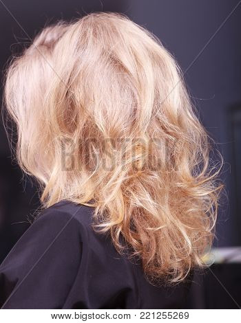 Female blond wavy hair. Back of woman girl head. By hairdresser in hairdressing beauty salon.