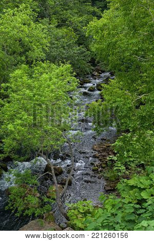 River flowing under a roof of green leaves in Shiretoko National Park, Hokkaido, Japan