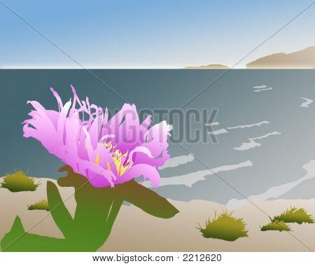 Flowercoastal
