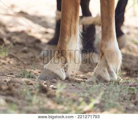 the horse's hooves . In the park in nature