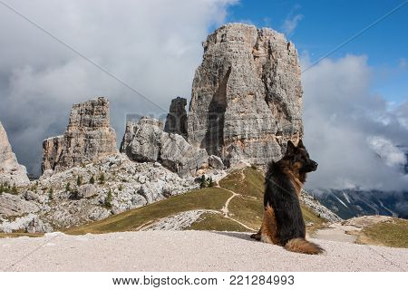 Picture Of A German Shepherd Dog On The Trails Of Cortina D'ampezzo, Dolomites, Italy