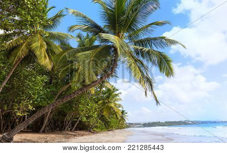 The Caribbean beach , Martinique island, French West Indies