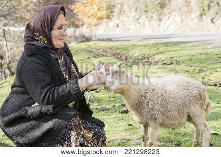 Masuleh, IRAN - December 22, 2017  Elderly Muslim woman knitting woollen sock when she care sheep in country side. Gilan Province