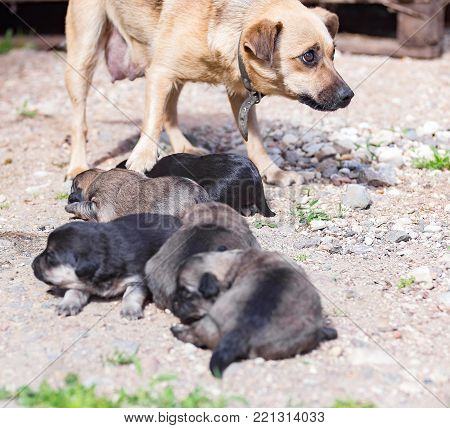 Bitch with her puppies on a hot summer ground.