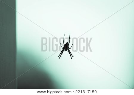 Silhouette of large spider hanging over a window with bright white and green background.