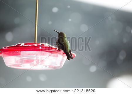 Green hummingbird perched on a red hummingbird feeder in winter.