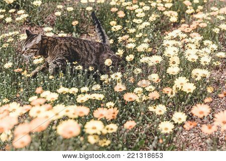 Dark-colored cat running or jumping through patch of flowers and grass.