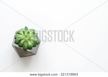 Succulent plant in concrete plant pot on white background. Copy space for text. Mock up