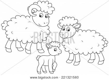 A small lamb, a sheep and a ram, a black and white vector illustration in funny cartoon style for a coloring book
