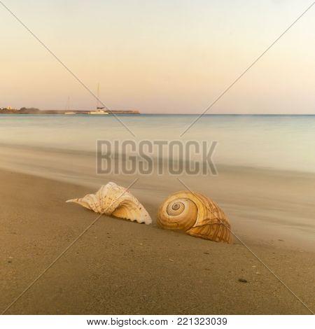 Two seashells against the sea of Xrisi akti in Paros island in Greece.