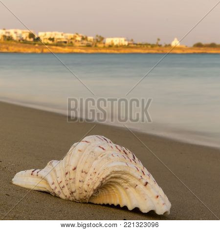 Seashell against the sea at Paros island in Greece.