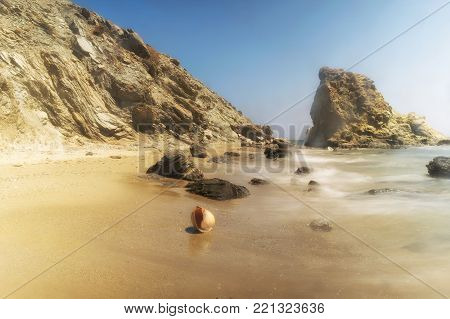 Beautiful seashell at Lolantonis rocky beach in Paros island.