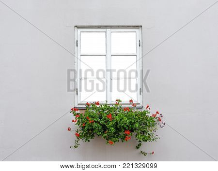 Beautiful old window frame with flower box and light grey wall. Geranium or cranesbill in window box. Rural window frame mock up. A closed wooden window isolated.