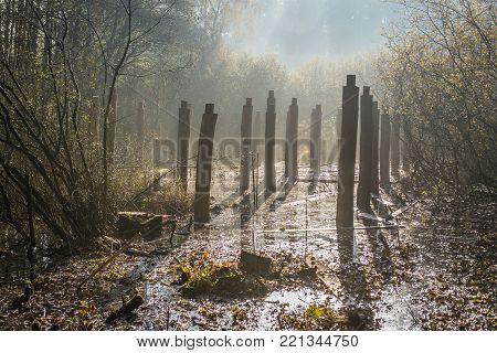 So called Moose Muds natural preserve near Warsaw, Poland