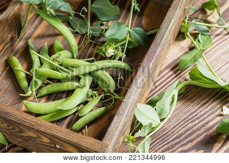 Pods Of Green Peas And Pea On A Dark Wooden Surface. Vintage Wooden Surface For Design With Beautifu