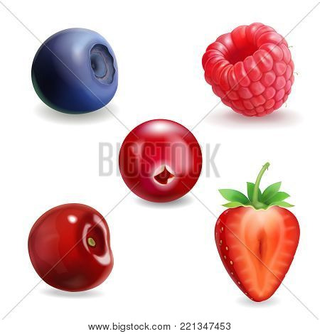 Realistic berry set. Strawberry, raspberry, blueberries and cherry black currant illustration.