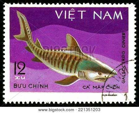 Ukraine - circa 2018: A postage stamp printed in Vietnam shows drawing Tiger Shark or Galeocerdo cuvier. Series: Shark and Dogfish. Circa 1980.