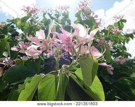 Flores Roxa Com o belo Amanhecer esplendoroso