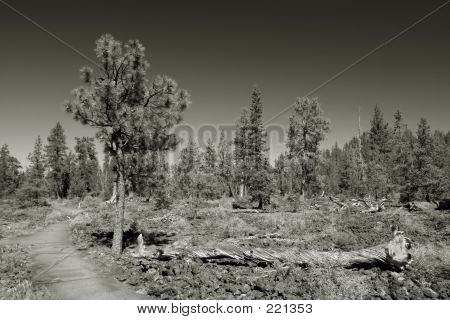 Lava Cast Forest, Newberry National Monument
