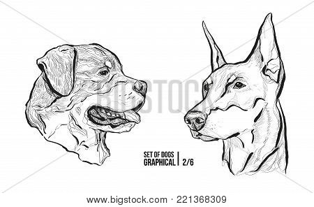 Set of portraits of dogs. Breeds Rottweiler and Doberman. Graphical vector illustration