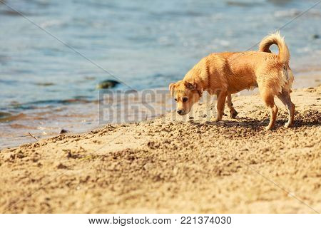 Animals and pets concept. Healthy full of energy dog playing outdoor. Cute lovely energetic smiling puppy in action.