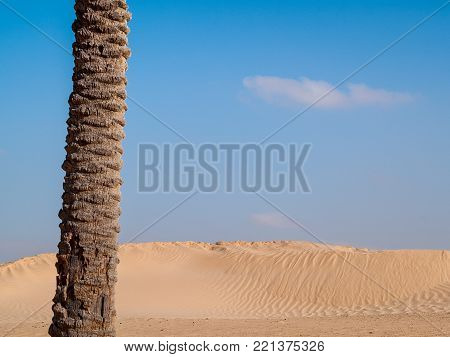 Sahara desert at Douz in Tunisia in the golden light of dawn