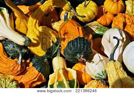 Pumpkins in different shapes and sizes. Diverse assortment of pumpkins, decorative pumpkins, pile of cute pumpkins in different colors at pumpkin patch in a local farm, seasonal display. France