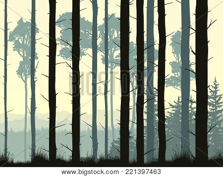 Vector illustration with many pine trunks and grass in the morning mist.