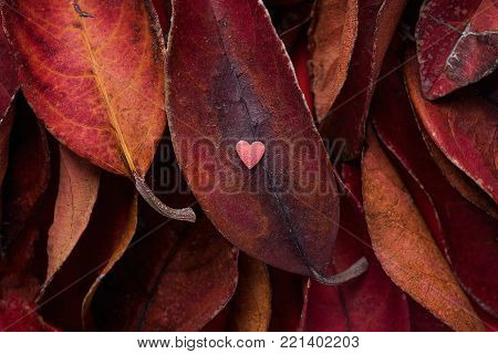 Pile of Dark Red Leaves with Small Heart Shape Pink Sugar Candy on Top. Rich Vibrant Crimson Color. Thanksgiving Fall Fashion Valentine. Banner Poster Greeting Card Template. Unique Creative Image