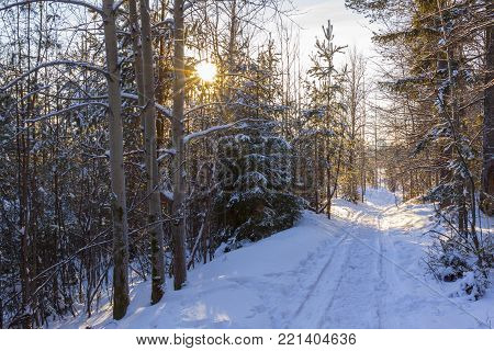 Winter forest in Sunny day snowy road to the city of Perm in the Urals